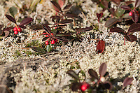 """Wintergreen Berries""<br />