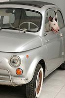 dog sitting on a fiat 500