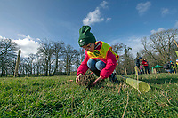 Blaendulais primary school pupil Georgia plants a small tree during the National Forest launch at the Woodland Trust event high on the mountainside above Neath in South Wales this morning at the newly planted Coed Cadw woodland.<br /> Re: National Forest launch at the Woodland Trust event high on the mountainside above Neath in South Wales this morning at the newly planted Coed Cadw woodland.