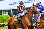 BALTIMORE, MD - MAY 19:  Shaman Ghost with JavierCastellano wins the Pimlico Special on Black-Eyed Susan Day at Pimlico Race Course on May 19, 2017 in Baltimore, Maryland.(Photo by Sue Kawczynski/Eclipse Sportswire/Getty Images)
