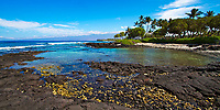 Beautiful tide pool of lava rocks, with palm trees and the Pacific Ocean's turquoise water in the background, on the Big Island of Hawaii