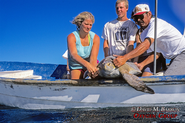Stephanie Gregory, Niko Gurda & Yoshio Suzuki Releasing Black Sea Turtle