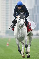 7 December 2017, Hong Kong - Yutaka Take on Smart Layer during track work prior to the Longines Hong Kong International Races at Sha Tin Racecourse in Hong Kong. Photo Sydney Low