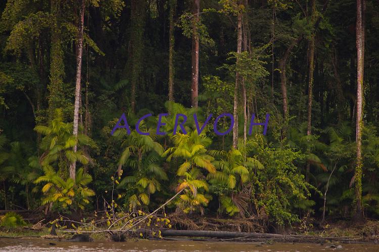 Na foz do Amazonas  a ausência de pessoas predominam nesta região, onde o Amazonas leva sedimentos ao mar criando grandes manguezais no litoral da região. A força das águas, aliada ao fenômeno da Pororoca na foz do Amazonas, causa o desmoronamento das margens  carregando consigo árvores, embarcações e outros objetos que se interponham à sua passagem violenta na região das ilhas Cavianas, um  dos últimos pedaços de terra no rio Amazonas em seu encontro com o  Atlântico.Marajó, Chaves, ilhas Caviana, Pará, Brasil.Foto: Paulo Santos16/06/2011