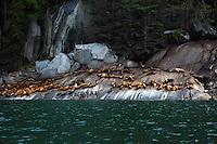 Steller's sea lion rookery