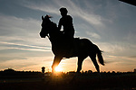 November 5, 2020: A racehorse trots on the track during morning workouts at Keeneland Racetrack in Lexington, Kentucky on November 5, 2020. Scott Serio/Eclipse Sportswire/Breeders Cup/CSM