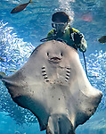 Giant ray is full of smiles at feeding time by David Williams