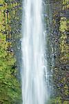 USA, HI, near Hilo, Akaka Falls SP, Akaka Falls