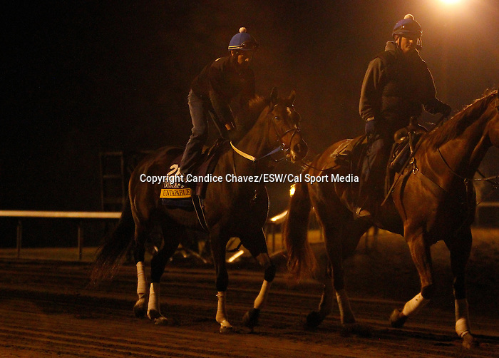 October 23, 2015:  Untapable, trained by Steven Asmussen, and owned by Winchell Thoroughbreds LLC, is entered in the Breeder's Cup Longines Distaff Grade 1 $2,000,000.  Candice Chavez/ESW/CSM