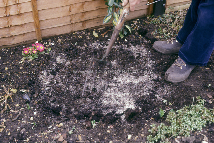 Amending the soil of a garden by working in bonemeal fertiliser into ground with garden fork. Person's feet visible