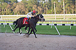 TAMPA, FL. MARCH 10 - running at Tampa Bay Downs  in Tampa, Florida.