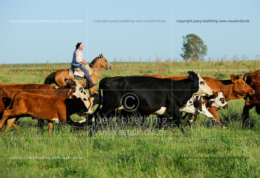 URUGUAY Bella Union, Gauchos auf Pferd arbeiten auf Rinderfarmen /<br /> URUGUAY Bella Union, Gauchos on horse at cattle farm