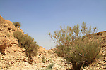 ahal Abuv in the Negev