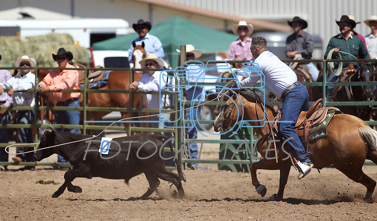 The Hone NIX team competes in the ranch doctoring event at the Minden Ranch Rodeo on Sunday, July 24, 2011, in Gardnerville, Nev. .Photo by Cathleen Allison