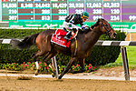 """ELMONT, NEW YORK - OCT 7: Diversity #1, ridden by Irad Ortiz Jr., wins the Jockey Club Gold Cup, a """"Win & You're In' event, at Belmont Park on October 6, 2017 in Elmont, New York. ( Photo by Eclipse Sportswire/Getty Images)"""