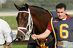 03 October 2009: Mary's Follies enters the paddock before the Grade II Fitz Dixon Cotillion Stakes at Philadelphia Park Race Track, Bensalem, Pennsylvania.