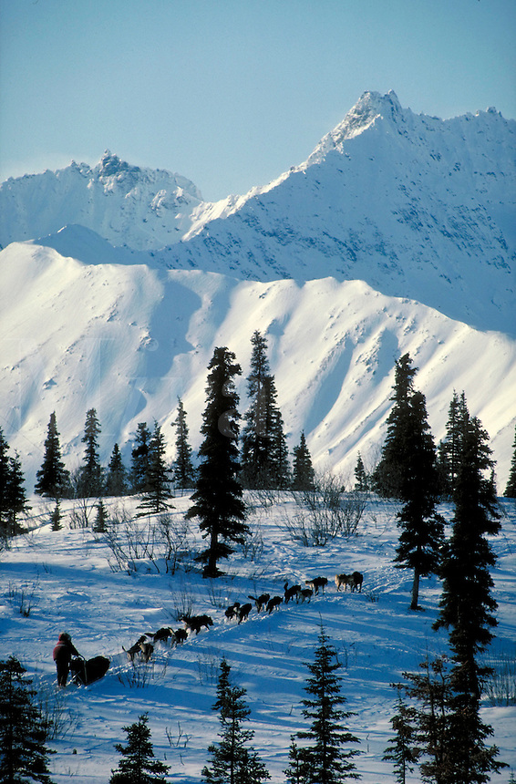 Musher and team of sled dogs run along the Anchorage-to-Nome Iditarod trail. Alaska mountain range near Rainy Pass. huskies, dog, animals, labor, sports, mountains, landscape. Alaska Iditarod Trail, near Rainy Pass.