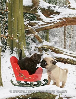 Kim, ANIMALS, dogs, photos(GBJBAK3245,#A#) Hunde, perros
