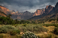 Monsoonal moisture has arrived during the hot summer at Zion National Park, Utah