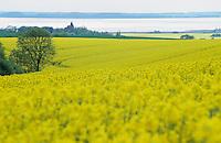 DEUTSCHLAND Insel Ruegen , bluehendes Rapsfeld am Jasmunder Bodden an der Ostsee , Blick auf Dorf Bobbin/ GERMANY  baltic sea island Ruegen , yellow rape seed field