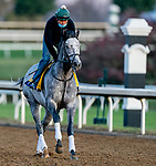 November 3, 2020: Tacitus, trained by trainer William I. Mott, exercises in preparation for the Breeders' Cup Classic at Keeneland Racetrack in Lexington, Kentucky on November 3, 2020. Scott Serio/Eclipse Sportswire/Breeders Cup