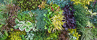 Panorama Display table tapestry, plant candy at Digging Dog Nursery; Heuchera 'Obsidian', Hakonechloa 'All Gold', Carex glauca, Brunnera 'Dawson's White'