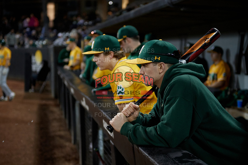 Siena Saints Eric Havner in the dugout during a game against the UCF Knights on February 14, 2020 at John Euliano Park in Orlando, Florida.  UCF defeated Siena 2-1.  (Mike Janes/Four Seam Images)