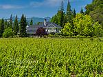 Duckhorn Vineyards, St. Helena, Napa Valley, California