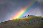Rainbow over Mount Sentinel in Missoula, Montana