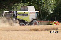 5.9.2020 A drone flying in front of a Claas combine   <br /> ©Tim Scrivener Photographer 07850 303986<br />      ....Covering Agriculture In The