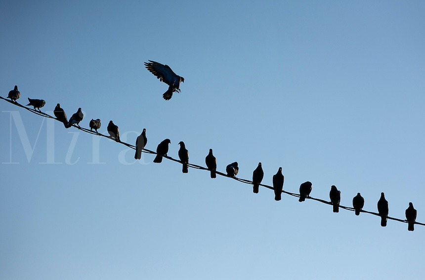 Birds on a wire.