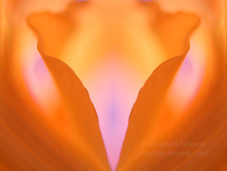 close-up of an orange gladiola flower