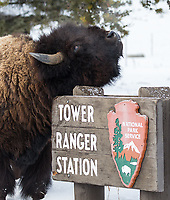 Scratching an itch at the Tower ranger station.
