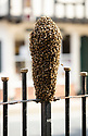 2021_05_27_Ashbourne_Bees