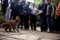 Visitors crowd around a macaque monkey at Monkey Island near Lingshui, Hainan, China.