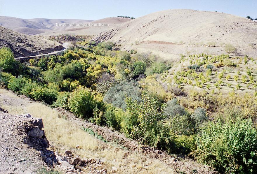 Irak 2000  Jardins d'arbres fruitiers dans les environs de Halabja  Iraq 2000  Fruit trees in a garden  near Halabja