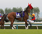 Gentildonna becomes Japan's 4th filly to win the Filly Triple Crown when she narrowly defeated arch rival Verxina in the G1 Shuka Sho on October 14th 2012 at Kyoto Racecourse.