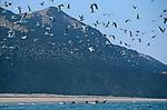 Kayak en mer d Oman. Sultanat d Oman. Peninsule arabique.