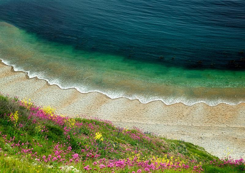 Wildflowers and waves. Man-o-War Beach Near durdle Door. Dorset Coast, England.
