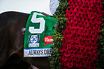LOUISVILLE, KY - MAY 06: The saddle towel and blanket of roses worn by Always Dreaming after winning the Kentucky Derby at Churchill Downs on May 6, 2017 in Louisville, Kentucky. (Photo by Alex Evers/Eclipse Sportswire/Getty Images)