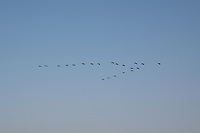 India, Gujarat, Kutch Desert, Bhadroi Village, birds flying.