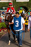 DEL MAR, CA  AUGUST 3: #3 Storm the Hill, ridden by Rafael Bejarano, in the paddock before the Yellow Ribbon Handticap (Grade ll) on August 3, 2019, at Del Mar Thoroughbred Club in Del Mar, CA..  (Photo by Casey Phillips/Eclipse Sportswire/CSM)