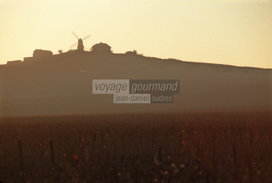 Europe/France/Champagne-Ardenne/51/Marne/Parc Naturel Montagne de Reims/Verzenay: le moulin à vent et le vignoble Champenois de la Montagne de Reims