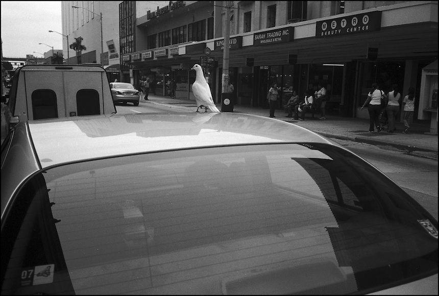 "From ""Walking Downtown"" series. Miami, 2007"