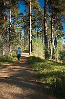 Anagach Woods near Grantown on Spey, Cairngorm National Park, Highland