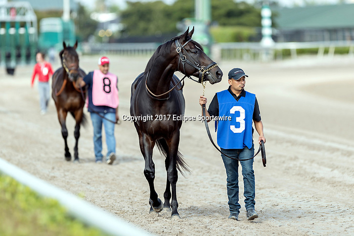 HALLANDALE BEACH, FL - December 30: #3 Gold Shield trained by Claude R. McGaughey III brought to paddock at Gulfstream Park on December 30, 2017 for the H. Allen Jerkens Stakes.  Hallandale Beach, FL. (Photo by Bob Aaron/Eclipse Sportswire/Getty Images)