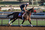 OCT 29 2014:Big Macher, trained by Richard Baltas, exercises in preparation for the Breeders' Cup Xpressbet Sprint at Santa Anita Race Course in Arcadia, California on October 29, 2014. Kazushi Ishida/ESW/CSM