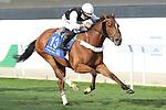 February 19, 2021: PETRUS #13 wins the second race on International Jockeys Challenge Day under W. Ramos, King Abdulaziz Racecourse, Riyadh, Saudi Arabia. Shamela Hanley/Eclipse Sportswire