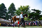 FUCHU,JAPAN-MAY 27: Wagnerian walks in the paddock before the Tokyo Yushun (Japanese Derby) at Tokyo Racecourse on May 27,2018 in Fuchu,Tokyo,Japan (Photo by Kaz Ishida/Eclipse Sportswire/Getty Images)