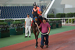 SHA TIN,HONG KONG-APRIL 28: Mongolian Saturday,trained by Ganbat Enebish,is chooling in preparation for the Chairman's Sprint Prize at the parade ring,Sha Tin Racecourse on April 28,2016 in Sha Tin,New Territories,Hong Kong (Photo by Kaz Ishida/Eclipse Sportswire/Getty Images)